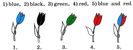 4. Раскрась тюльпаны правильно.